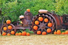 Local fruit shop, dealer in Princeton, British Columbia. Nice decoration with pumpkin, groud, fruits on Vintage tractor Royalty Free Stock Image