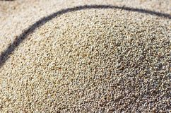 Local grains for sale in Lalibela royalty free stock image
