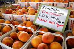 Local Grown Peaches. Local Grown Sweet Peaches from South Carolina Royalty Free Stock Photography
