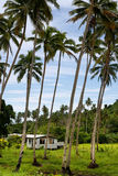Local house in palm grove, Vanua Levu island, Fiji Stock Image