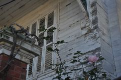 A local house and roses royalty free stock photo