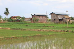 Local houses in Burma. Bamboo houses in the rice fields Royalty Free Stock Image