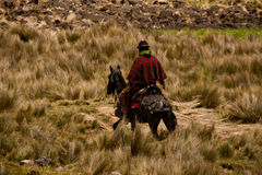 Local indigenous man riding a horse along the. Foothills of Chimborazo volcano, Ecuador, South America Royalty Free Stock Photography
