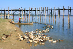 Local man in a boat near U Bein Bridge, Amarapura, Myanmar Royalty Free Stock Photography