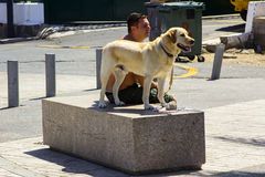 A local man and his Labrador dog siting on a marble plinth in bright sunshine the main street of Playa Las Amrericas in Teneriffe. A local man and his pedigree Royalty Free Stock Images