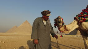 Local man kissing his camel in front of Giza pyramids stock video footage