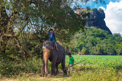 Local man  riding on the back of elephant Royalty Free Stock Images