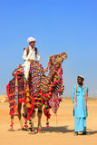Local man riding a camel at Desert Festival, Jaisalmer, India Royalty Free Stock Images