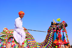 Local man riding a camel at Desert Festival, Jaisalmer, India Royalty Free Stock Photo
