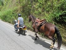 Local man towing a horse with his moped, Colombia Royalty Free Stock Photo