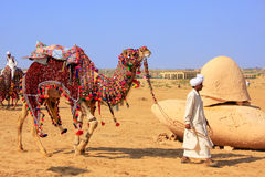 Local man walking with his camel at Desert Festival, Jaisalmer, Royalty Free Stock Photography
