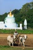 Local man working on a farm field near Buddhist temple, Amarapur Stock Images