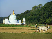 Local man working on a farm field near Buddhist temple, Amarapur Royalty Free Stock Image