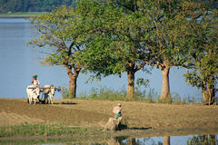 Local man working on a farm field near lake, Amarapura, Myanmar Stock Image
