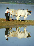 Local man working on a farm field near lake, Amarapura, Myanmar Royalty Free Stock Photo