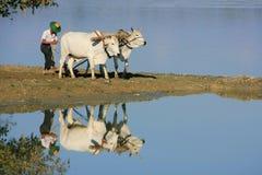 Local man working on a farm field near lake, Amarapura, Myanmar Royalty Free Stock Image