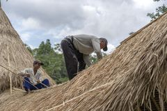 Local men fixing a new straw roof in Ubud, island Bali, Indonesia. Construction workers working on a building thatch roof. UBUD, BALI, INDONESIA - MARCH 24, 2019 royalty free stock photography