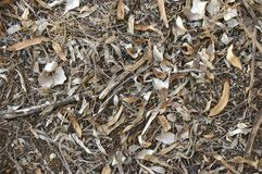 Free Local Native Australian Leaf Litter With Gum Tree Branches And Leaves On The Ground Stock Photo - 132212550