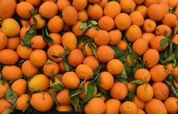 Local oranges  on market in Cyprus. Local products, fresh oranges on a organic  market in the northern part of Cyprus Royalty Free Stock Images