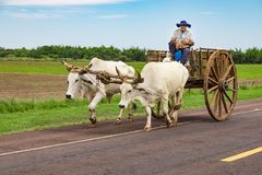 A local Paraguayan transports sugarcane with his ox cart royalty free stock photo