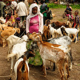 Local people on the market in the town of Lalibela, Ethiopia Royalty Free Stock Photo