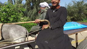 Local people riding donkey cart on the road in Luxor stock video footage