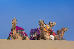 Local people and their camel rest on Thar desert Stock Image