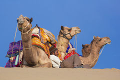 Local people and their camel rest on Thar desert Stock Images