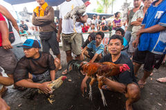 Local people during traditional cockfighting competition. Royalty Free Stock Photos