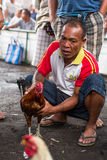 Local people during traditional cockfighting competition. Stock Photo
