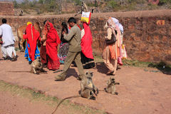 Local people walking around Ranthambore Fort amongst gray langur Stock Photos