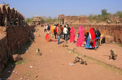 Local people walking around Ranthambore Fort amongst gray langur Royalty Free Stock Image