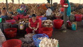 Local people working in coconut processing plant, Mekong Delta, Vietnam, South East Asia stock footage