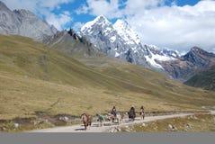 Local Peruvian horseman carrying goods in Peru royalty free stock photo