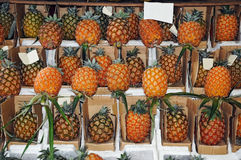Pineapples. Local pineapples in the market of Ponta Delgada, Azores Royalty Free Stock Images