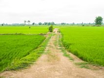 Local road on countryside Royalty Free Stock Images