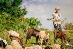 Local shepherd with his flock. Stock Photography