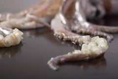 Local squid Royalty Free Stock Photos
