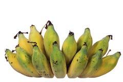 Local Thai banana isolated Stock Image