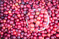 Local Thai forest berry fruit in Chiang Mai market Royalty Free Stock Images
