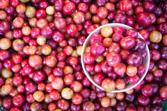Local Thai forest berry fruit in Chiang Mai market Royalty Free Stock Image