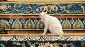 Old Pagoda Decorate With Colorful  Ceramic Tile And One Cat. Local  traditional art decorations with colored mosaics on the temple and pagodas with one white cat Stock Image