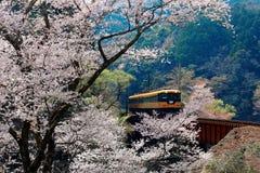 A local train traveling on a railroad bridge by a flourishing cherry blossom Sakura tree near Sasamado Station. In Kawane, Shimada, Shizuoka, Japan~ Spring stock photos