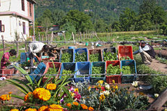 Local vegetable market in a village in India Royalty Free Stock Photography