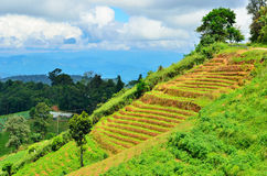 Local view at Mon jam Chiang mai Royalty Free Stock Photo