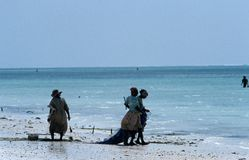 Local women looking for fish and seashells, Zanzibar Stock Photo