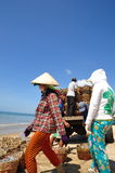Local women are uploading fisheries onto the truck to the processing plant in Lagi beach Stock Photography