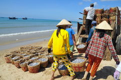 Local women are uploading fisheries onto the truck to the processing plant in Lagi beach Royalty Free Stock Photos