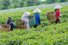 Local women with vietnamese conical hat Stock Photos