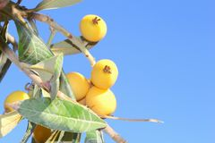Local yellow fruits blue sky, Majorca, Spain Royalty Free Stock Photography